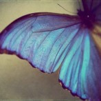 The Butterfly Syndrome